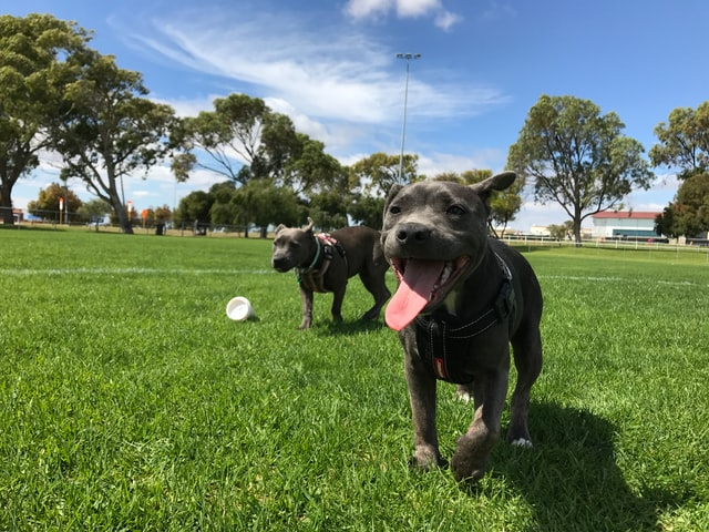 doggy date night take dog to park