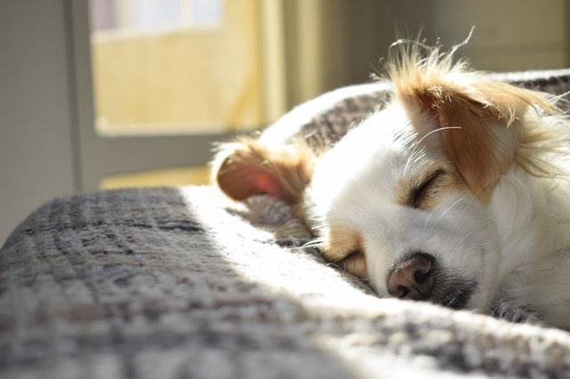 healthy dog treats dog sleeping
