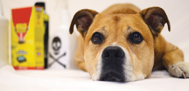 items toxic to dogs detergents