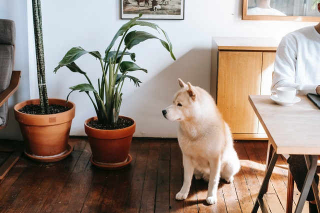 items toxic to dogs plants