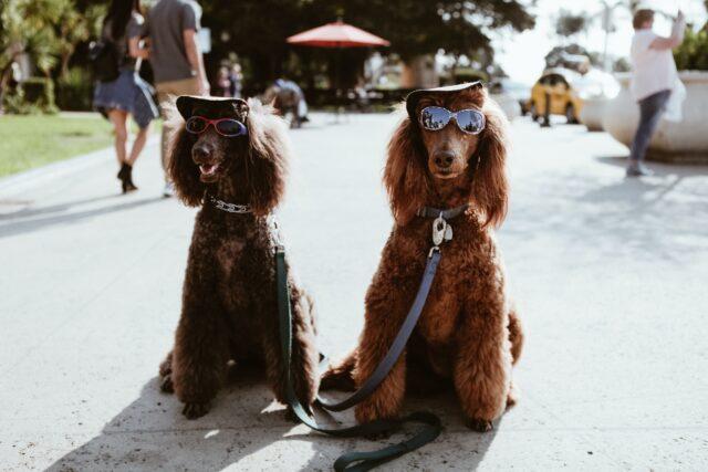 dog fashion clothes