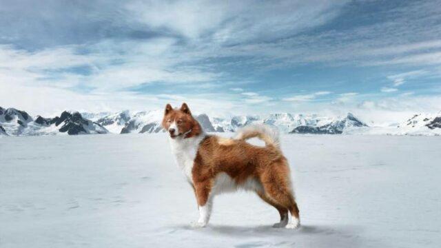 most expensive dog breeds canadian eskimo dog