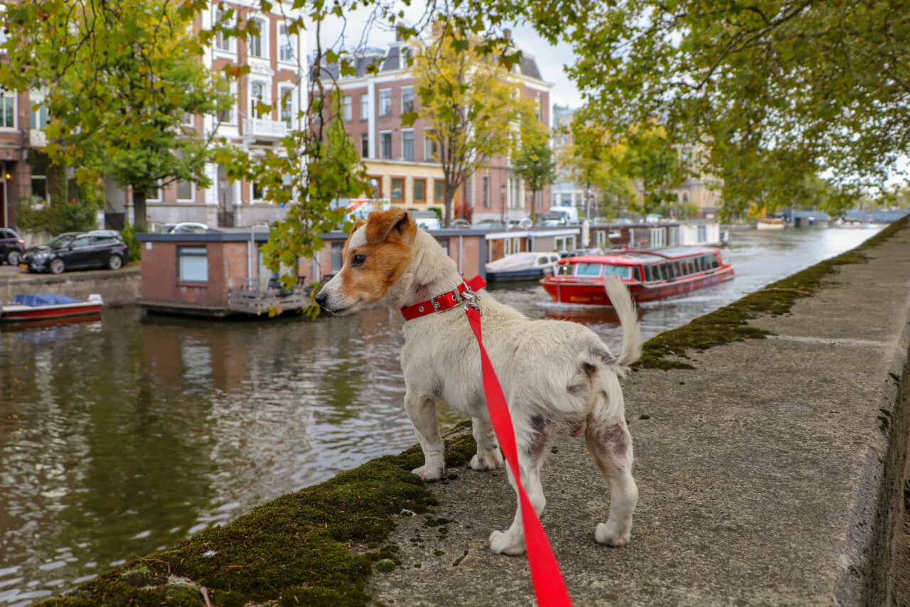 https://ilovemydogsomuch.com/wp-content/uploads/2021/05/new-dog-owner-shop-list-leash-1280x854.jpg