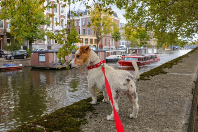 new dog owner shop list leash