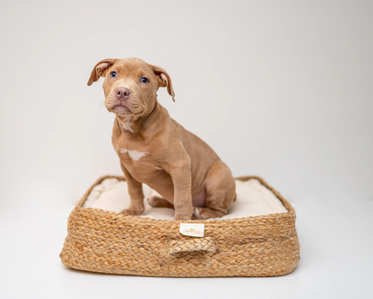 https://ilovemydogsomuch.com/wp-content/uploads/2021/05/new-dog-owner-shopping-list-bed-1280x1024.jpg
