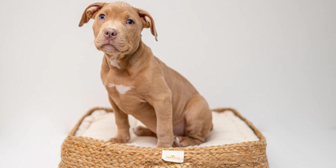 https://ilovemydogsomuch.com/wp-content/uploads/2021/05/new-dog-owner-shopping-list-bed-1280x640.jpg