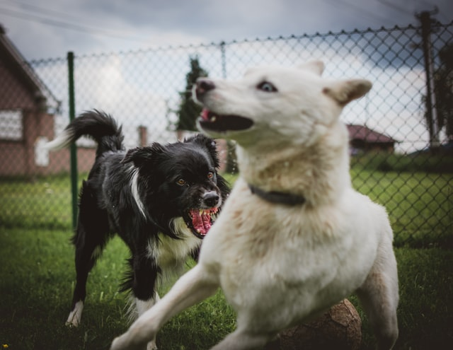 signs your dog is unhappy aggressive