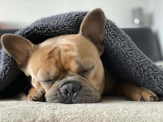 signs your dog is unhappy dog sleeping