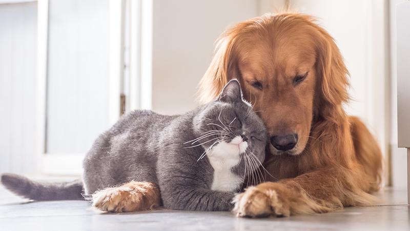 https://ilovemydogsomuch.com/wp-content/uploads/2021/06/Ideal-Dog-Breed-Characteristics-for-Multi-Pet-Homes.jpg