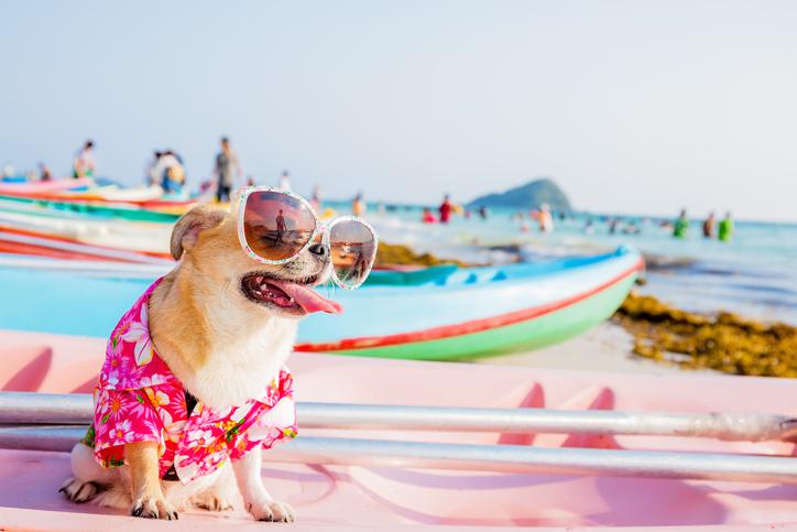 https://ilovemydogsomuch.com/wp-content/uploads/2021/06/The-Best-Aussie-Beaches-for-Dog-Friendly-Dates.jpg