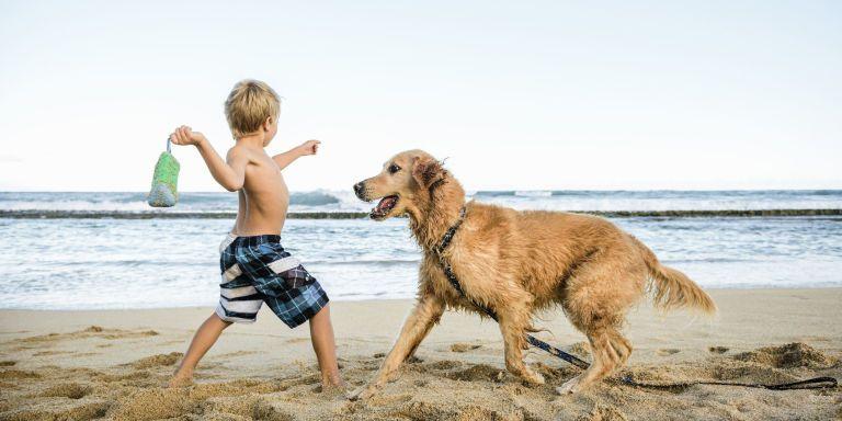 https://ilovemydogsomuch.com/wp-content/uploads/2021/06/The-Best-U.S.-Beaches-for-Dog-Friendly-Dates.jpg