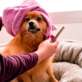 dog bath and grooming supplies towels