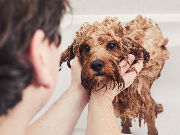 https://ilovemydogsomuch.com/wp-content/uploads/2021/06/dog-bathing.jpg