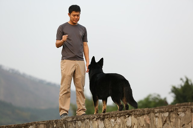 dog breed characteristics training