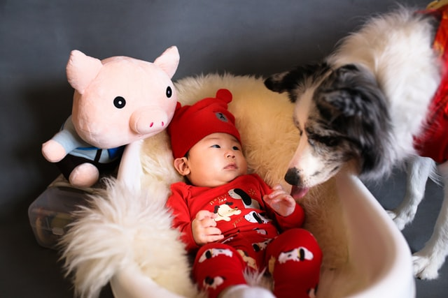 dog breeds best for babies collie and baby