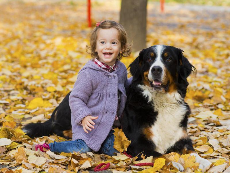 https://ilovemydogsomuch.com/wp-content/uploads/2021/06/dog-breeds-for-babies.jpeg