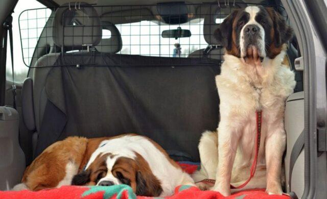 dog car barrier