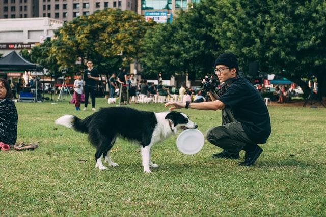 dog characteristics for off leash
