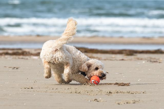 dog exercise on the beach