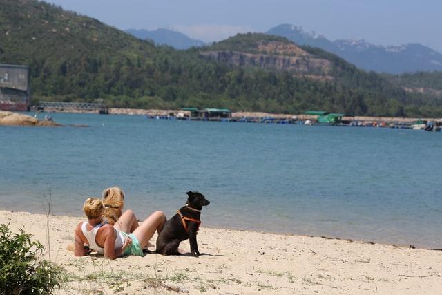 dog friendly dates on the beach