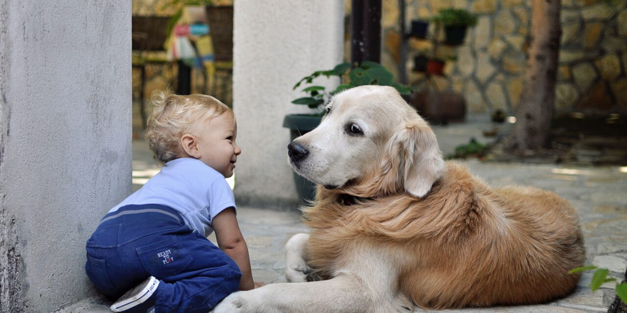 https://ilovemydogsomuch.com/wp-content/uploads/2021/06/dog-personality-golden-retriever-and-baby-1280x640.jpg