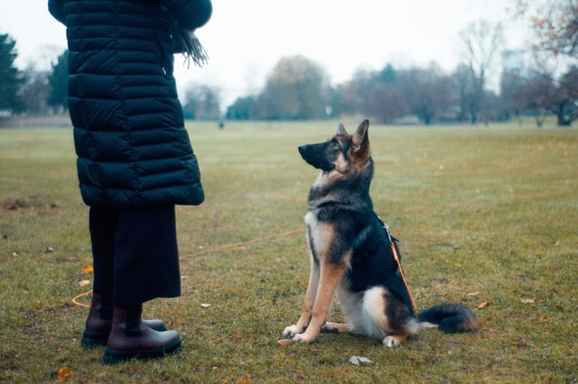 dog training characteristics