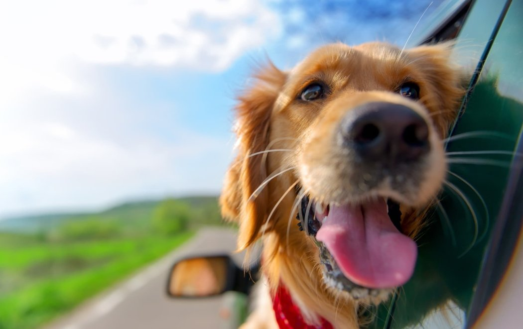 https://ilovemydogsomuch.com/wp-content/uploads/2021/06/dogs-on-a-roadtrip.jpg