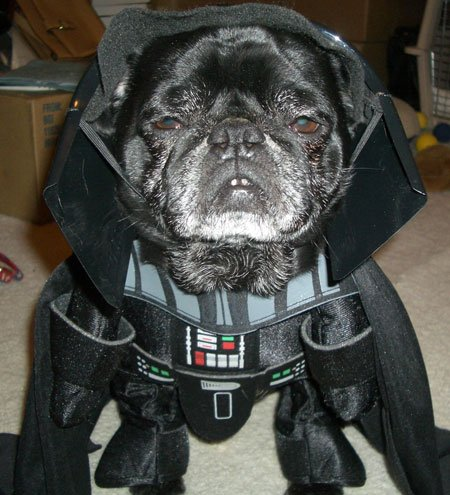 dor related idioms funny name arf vader