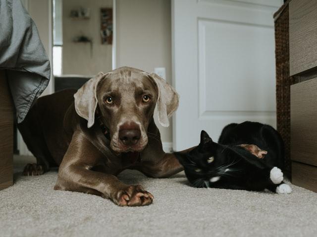labrador retriever dog personality
