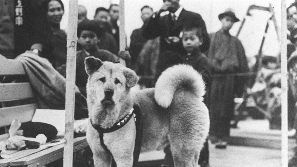 https://ilovemydogsomuch.com/wp-content/uploads/2021/07/Hachiko-and-people.jpg
