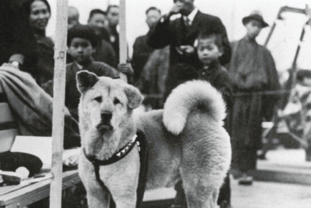 Hachiko and people