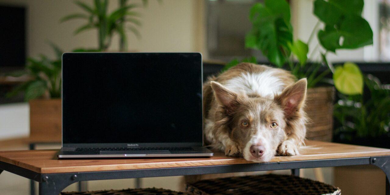 https://ilovemydogsomuch.com/wp-content/uploads/2021/07/dog-and-computer-2-funniest-dog-videos-1280x640.jpg