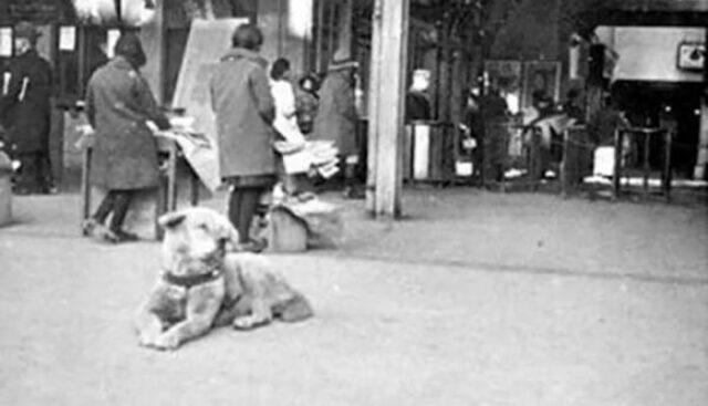 rare photos of most loyal dog hachiko
