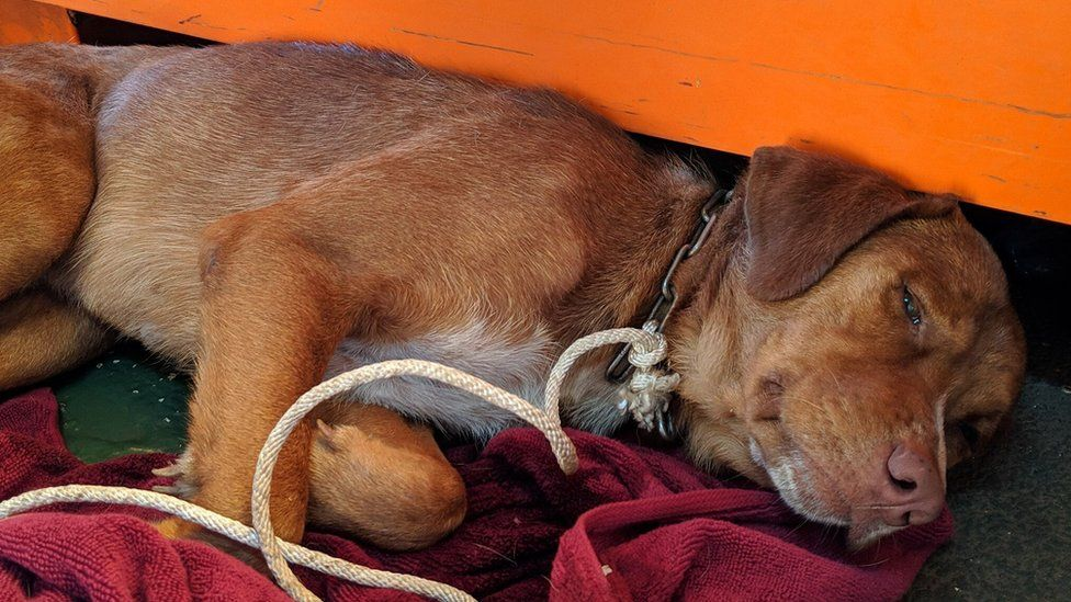 Boonrod the dog saved from drowning