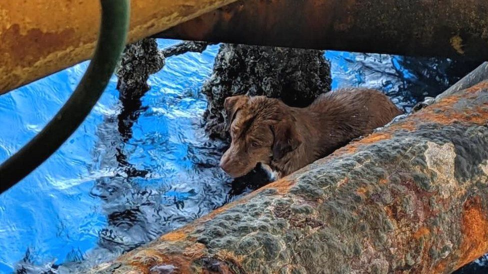 https://ilovemydogsomuch.com/wp-content/uploads/2021/08/Dog-rescued-135-miles-out-at-sea-1.jpg