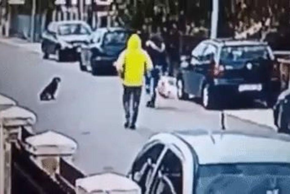 https://ilovemydogsomuch.com/wp-content/uploads/2021/08/Dog-saves-woman.jpg