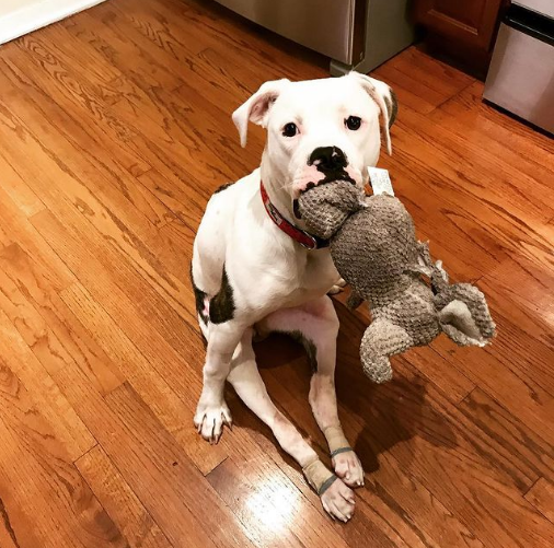 Pigeon paralyzed dog with doll image 2