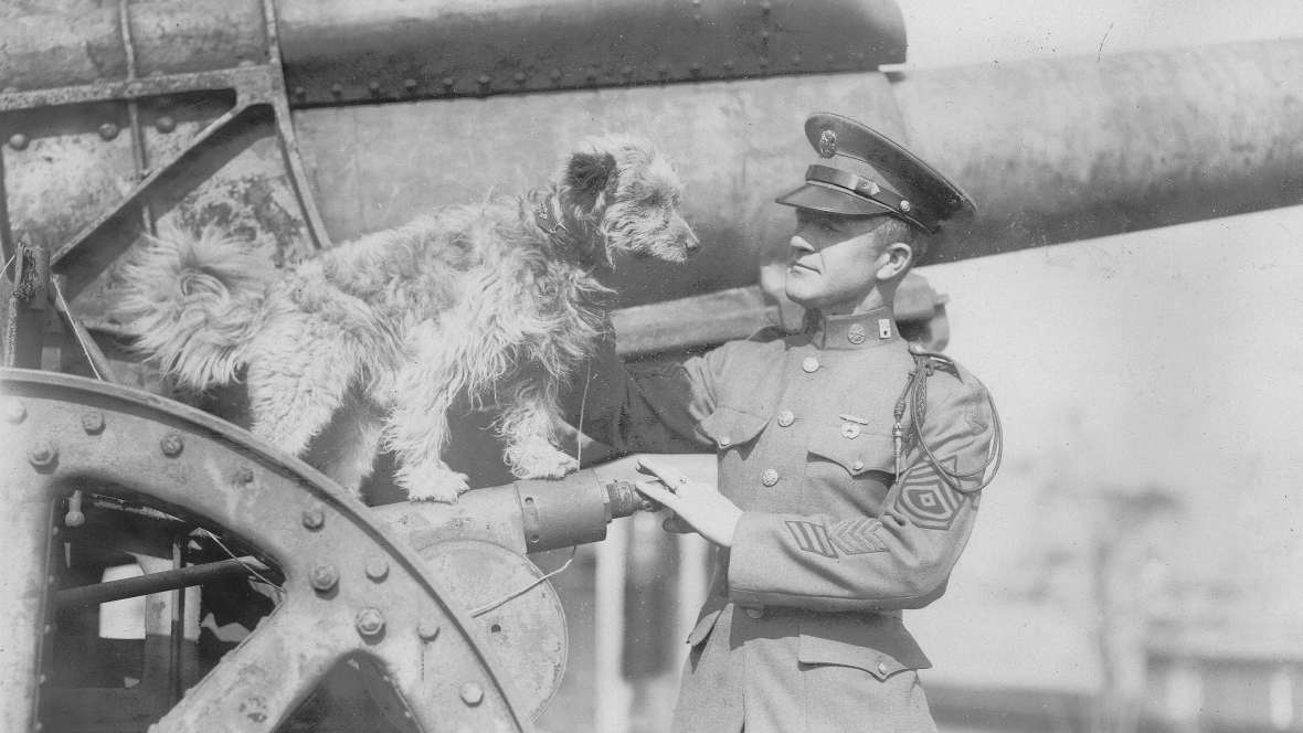 https://ilovemydogsomuch.com/wp-content/uploads/2021/08/Rags_World-War-Dog-Hero.jpg