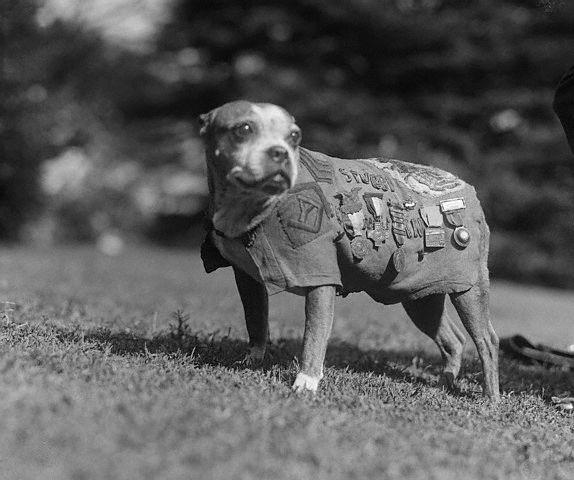https://ilovemydogsomuch.com/wp-content/uploads/2021/08/Sergeant-Stubby.jpg