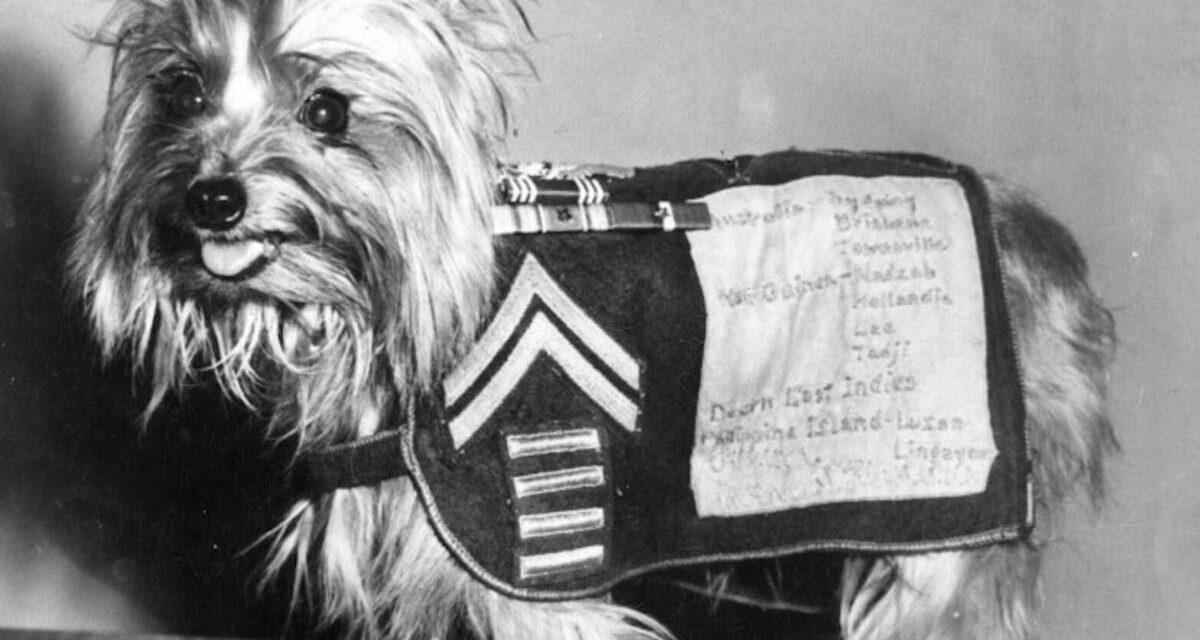 https://ilovemydogsomuch.com/wp-content/uploads/2021/08/Smoky-the-Dog_War-Veteran-1200x640.jpg