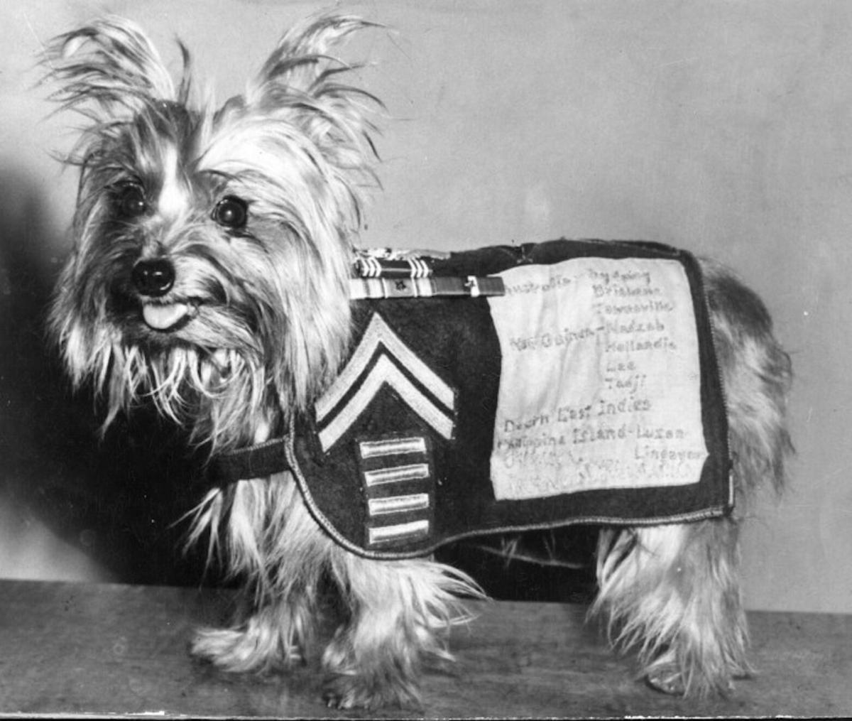 https://ilovemydogsomuch.com/wp-content/uploads/2021/08/Smoky-the-Dog_War-Veteran.jpg
