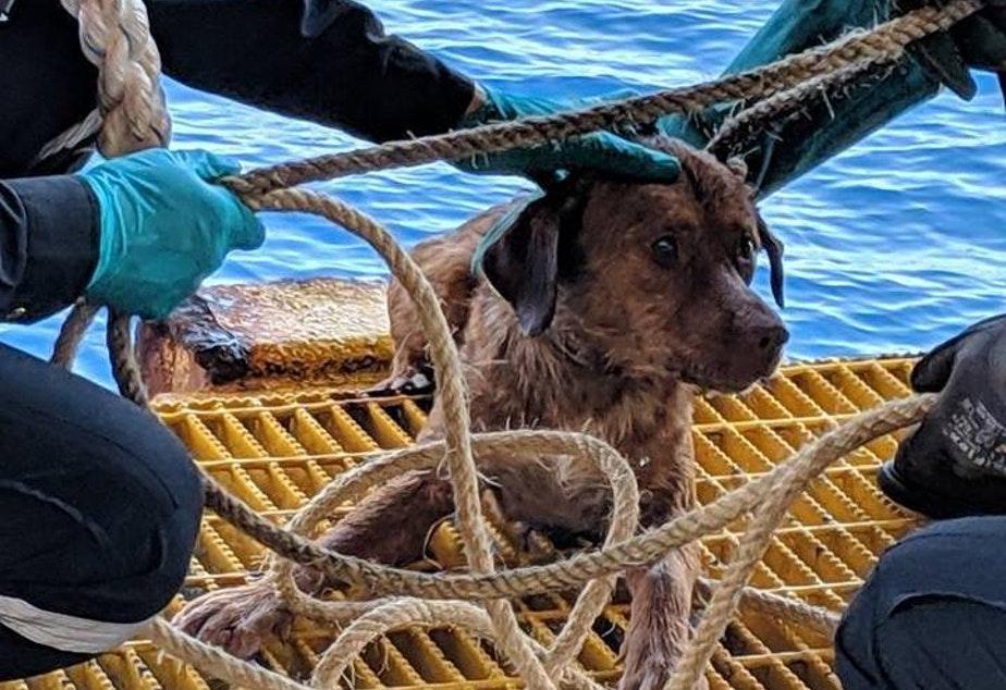 dog found 135 miles off thailand coast