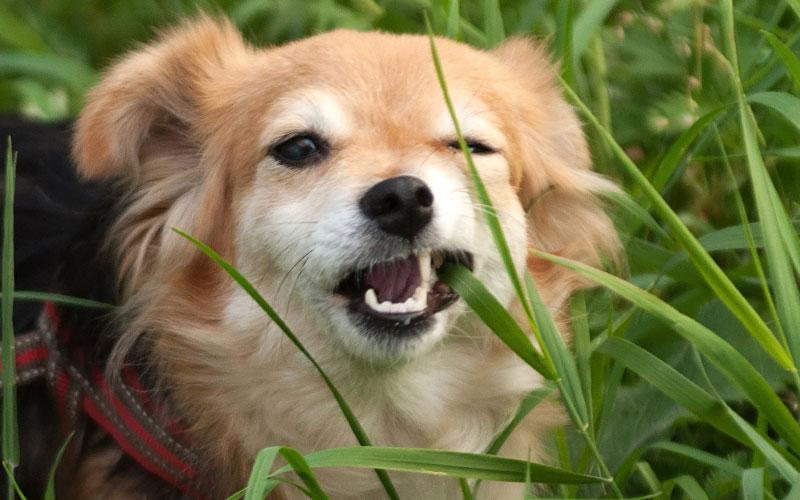 https://ilovemydogsomuch.com/wp-content/uploads/2021/08/dog-myths.jpg