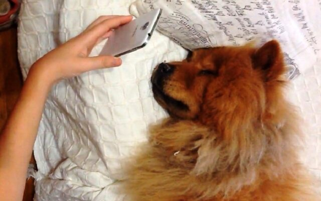 dog on video call with mom