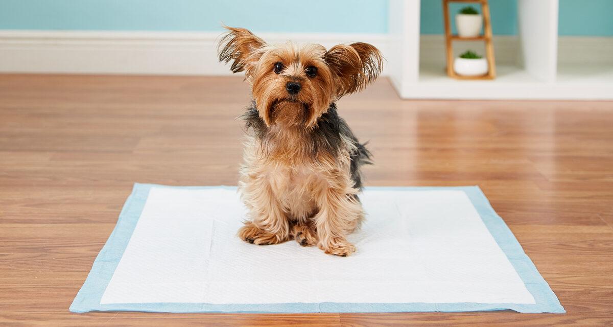 https://ilovemydogsomuch.com/wp-content/uploads/2021/08/dog-pee-pads-1200x640.jpg