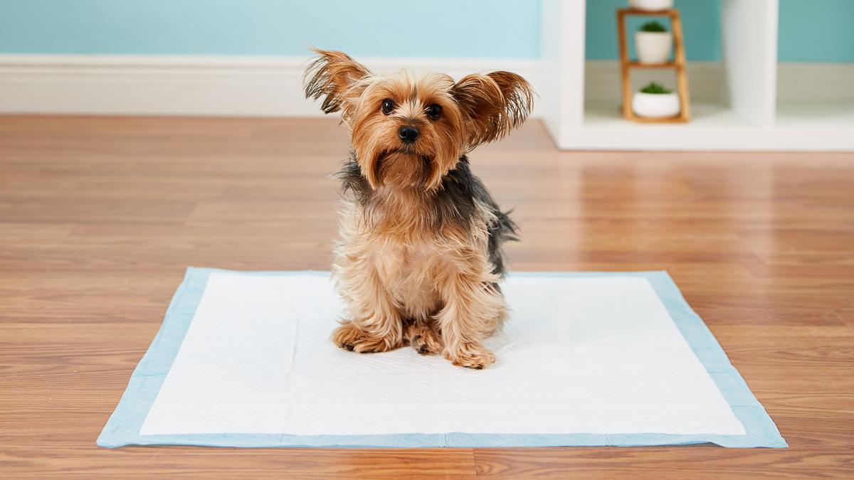 https://ilovemydogsomuch.com/wp-content/uploads/2021/08/dog-pee-pads.jpg