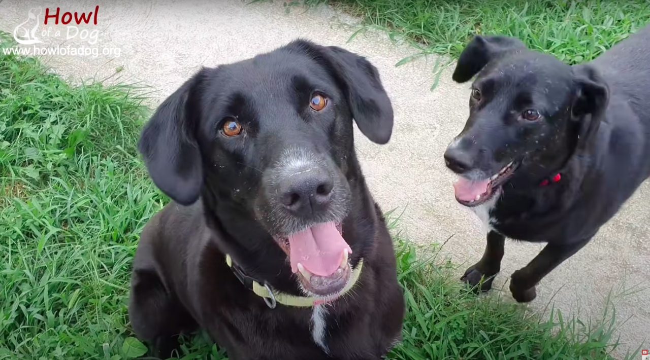 https://ilovemydogsomuch.com/wp-content/uploads/2021/08/dog-rescue-angel-3-1280x710.png