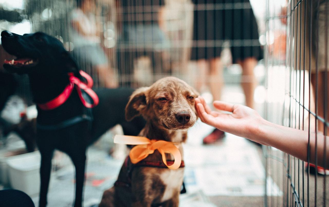 https://ilovemydogsomuch.com/wp-content/uploads/2021/08/dog-rescue-pet.jpg