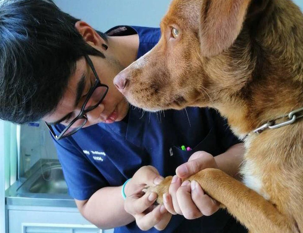 dog rescue stories
