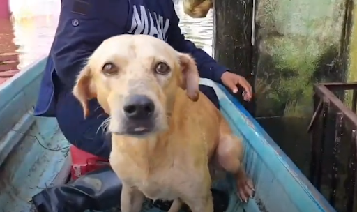 https://ilovemydogsomuch.com/wp-content/uploads/2021/08/dog-rescued-in-Mexico-flood.png